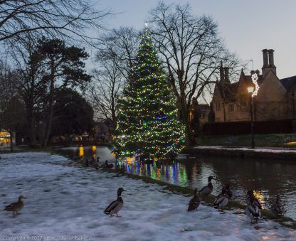 A beautifully decorated Christmas tree at Bourton-on-the-water with ducks in the foreground